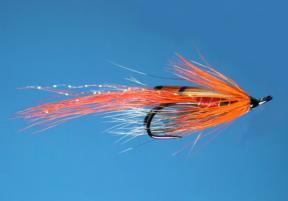 allys-shrimp-crevette-ally-gowans